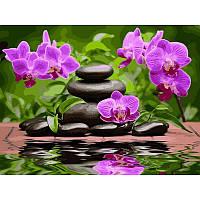 Картина по номерам Лиловые орхидеи 40х50см, С Коробкой