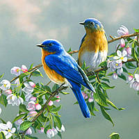 Картина по номерам Птички на яблоне 40х50см, С Коробкой