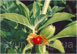 Ашвагандха в порошке / Ashwagandhadi churna / Baidyanath / 100 g