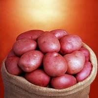 Семенной картофель Ромео сорт среднеспелый лежкий крупный устойчивый к вирусам класс 1Р ф 35 - 55 мм Голландия