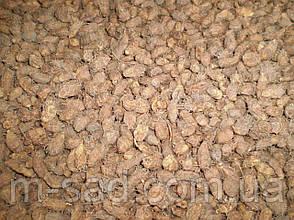 Ореншки чуфы,земляной миндаль, фото 2