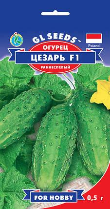 Огурец Цезарь F1, пакет 0.5 г - Семена огурцов, фото 2