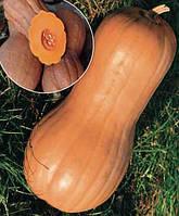 Семена тыквы Виолина 0,5 кг. Коуел