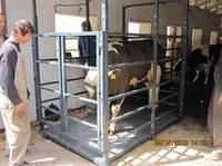 Электронные весы для взвешивания крупного рогатого скота