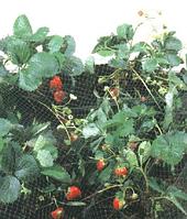Защитная сетка от птиц, 4м*500м