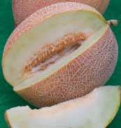 Семена дыни Ананас 0,5 кг. Коуел