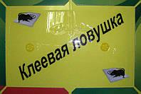 Мышеловка, Catch Expert, капкан на крысу, клеевая ловушка (NS), фото 1