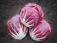Индиго F1 - семена цикория салатного, Bejo Zaden - 5 000 семян