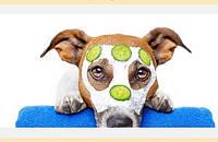 Диагностика  и лечение домашних животных в ветклинике Мурзик