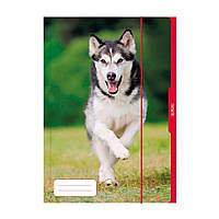 Папка картонная на резинке Herlitz А3 Dog (10285708)