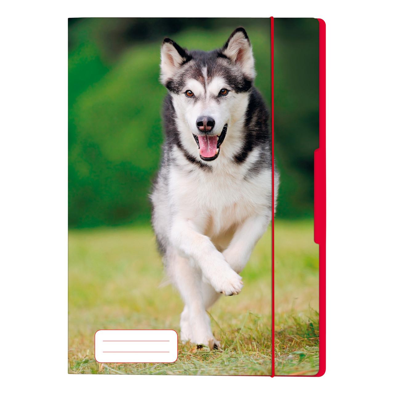 Папка картонная на резинке Herlitz А4 Dog (50001583)