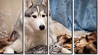 4 модульная картина (равномодульная) ХАСКИ И КОТ