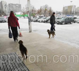 где можно ожидать нападения опасных собак на людей
