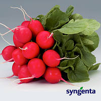 Донар - семена редиса, Syngenta - 10 000 семян