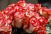 Крупные розы с доставкой Cabaret (Кабаре)
