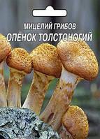 Мицелий Опенок толстоногий (5 грибных палочек)
