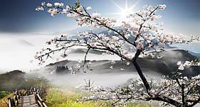 """3D фотообои """"Цветущее дерево в горах"""" 3,70*2,05"""