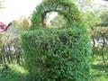 Деревья, кустарники и саженцы для живых изгородей, заборов, ограждений