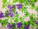 Ткань коттон стрейчевый рисунок летняя акварель, пудра, фото 2