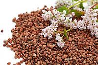 Гречка, зерно семена гречки органической для проращивания 500 грамм