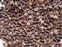 Гречка, зерно семена гречки органической для проращивания 200 грамм