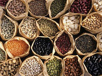 ЧЕЧЕВИЦА Микрозелень, зерно семена чечевицы органической для проращивания 450 грамм, фото 1