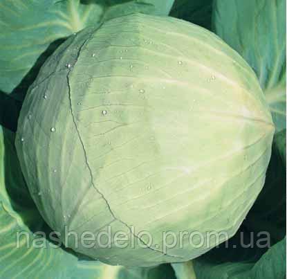 Семена капусты б/к Белоснежка 100 гр. Коуел (Хортус)