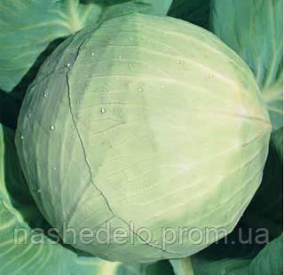 Семена капусты б/к Белоснежка 0,5 кг. Коуел (Хортус)