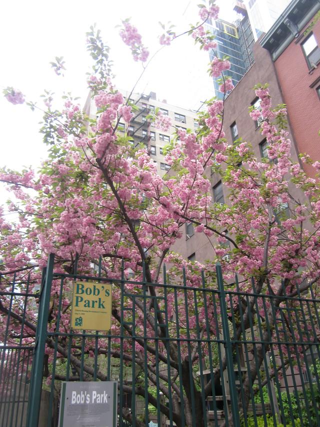 Раздел Женские комбинезоны - фото teens.ua - New York,детская площадка Bobs Park,34 улица,цветущая сакура