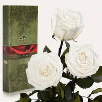 Три долгосвежих розы Белый Бриллиант 5 карат на коротком