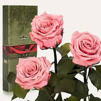Три долгосвежих розы Розовый Кварц 7 карат (короткий стебель)