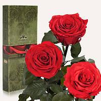Три долгосвежих розы Красный Рубин 7 карат (короткий стебель)