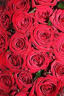 Квіти живі троянди (Цветы розы)