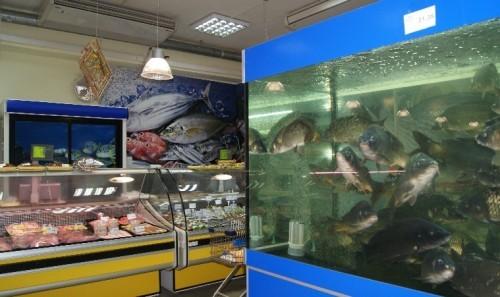 Торговые аквариумы ТМ Акватика для продажи живой рыбы