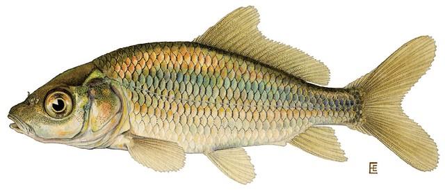 Содержание рыбы в торговых аквариумах. Правила и нормы.