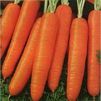 Морковь ранняя Ступицкая  2 г