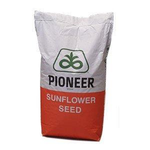 Семена подсолнечника PIONEER P64LЕ25 (П64ЛЕ25) укр Круизер