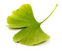 Гинкго билоба лист 25 г