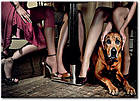 "Картина на холсте YS-Art XP017 ""Собаки под столом"" 50x70        , фото 2"