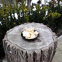 Осьминог вяленый ОПТ, фото 1