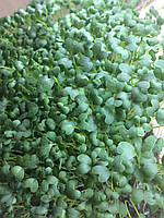 Насіння мізуни зеленої для мікрозелені, 10 г
