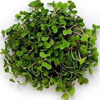 Насіння броколі для мікрозелені, 10 г