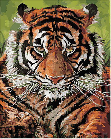Картины по номерам 40*50 см В КОРОБКЕ Взгляд тигра Artstory