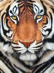 """Алмазная вышивка 40х30см - набор """"Тигр"""""""