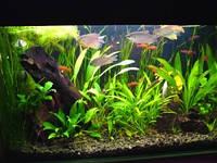 Аквариумы, дизайн и оформление аквариума