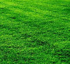 Смесь газонных трав Газон Спасатель