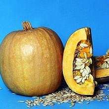 Семена тыквы Болгарка