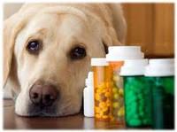 Ветеринарные препараты для лечения гельминтов (глистов) у домашних животных