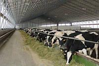 Реконструкция коровников и животноводческих комплексов, фото 1