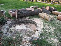 Удаление, услуги улаление спил деревьев Киев. Формирование кроны.